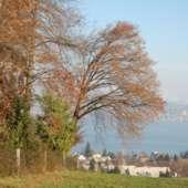 Aussicht Alpenweg